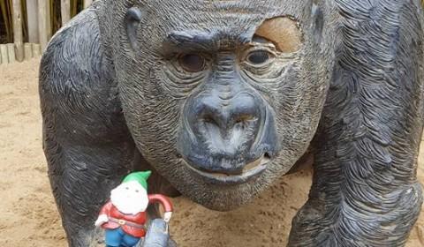 Ohhhh Gorilla